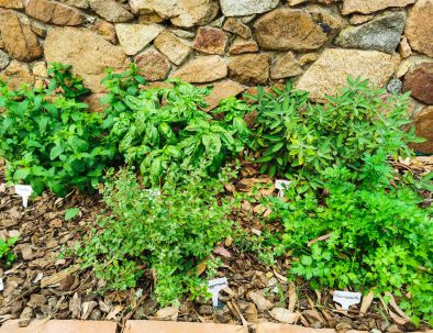 Casa Suestellas erbe aromatiche